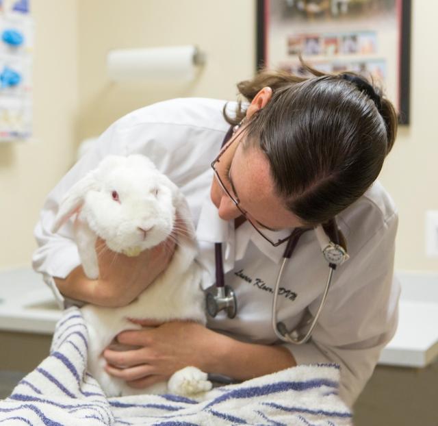 Leesburg Veterinary Hospital Leesburg VA