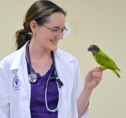 "Dr. Kloer with ""Drake"" the Senegal parrot.  Image source: J Sealor Photography"