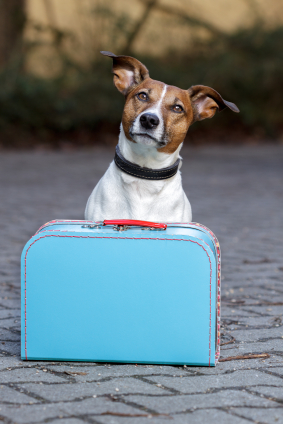 A wide variety of pet boarding options in NoVA means your pet will be just as pampered as you while you're away! Image source: istock photo