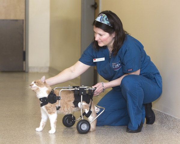 Joanne and Tshirt testing out his wheelchair in hospital's hallway.