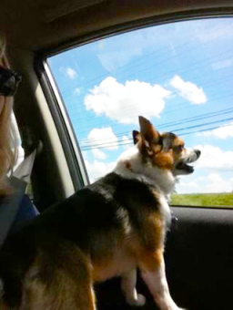 One of Leo's favorite past times- car rides! Image source: Nicki Yehle