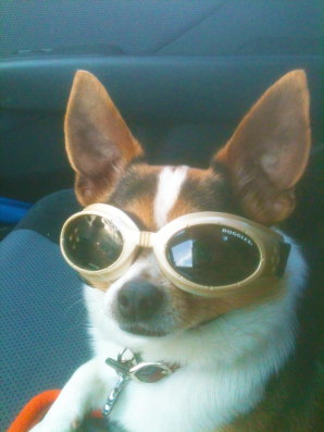 Leo_sunglasses_edit