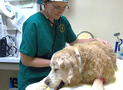 Dr. Kloer examines Willow prior to her dental treatment.