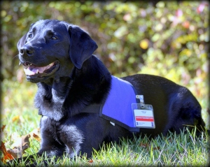 Tex was certified as a therapy dog through Pet Partners.  That contagious smile helps bring comfort to patients at Inova Fairfax Hospital.