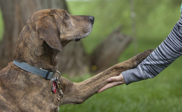 Early socialization helps young pups develop into happy, confident, dogs. Image source: Ellen Zangla Photography