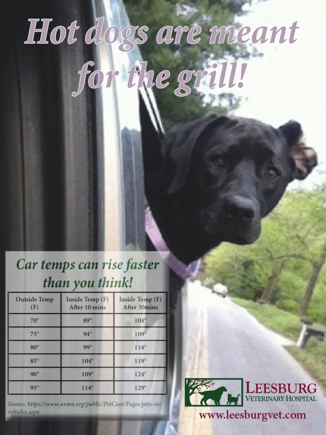 keep dogs out of hot cars