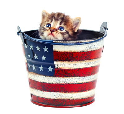 fourth-cat-bucket