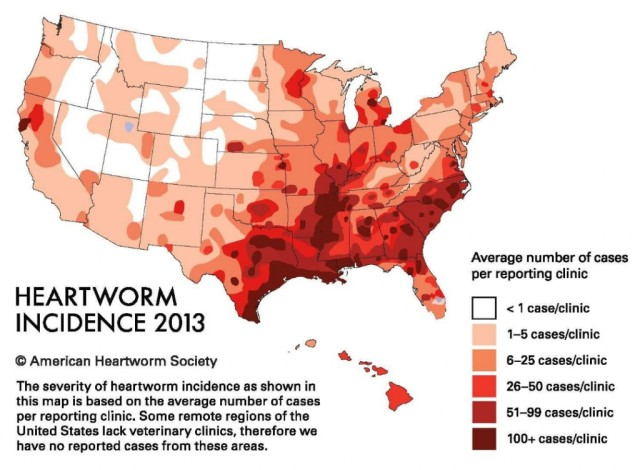 This map shows the regional incidence of heartworm disease in the United States. It only takes one bite from an infected mosiquot to transfer heartworms to your pet. Image source: American Heartworm Society.