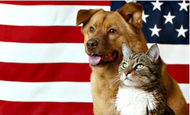 patriotic-pets1