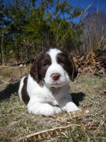 Elphie as a pup - sweet but extra spunky! All images courtesy: Amy Bosley