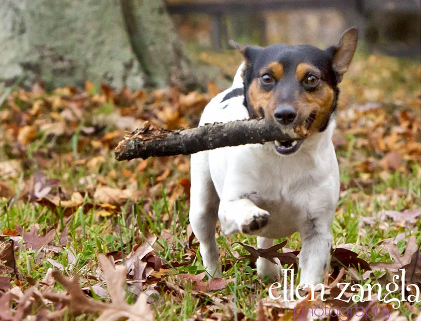 Fall is here! It's a great time to get out with your playful pooch. For the most stress free experience for both you and your pet, leave the retractable leash at home.