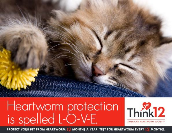 Image Source: American Heartworm Society