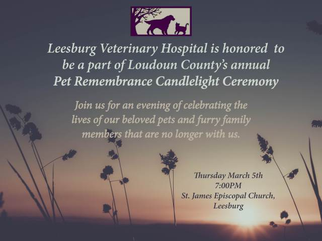 Pet Candlelight Ceremony- LVH web image