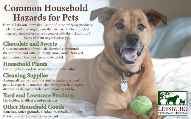 Household Items Toxic to Pets Dogs Cats