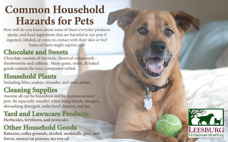 Pet Toxins Animal Poison Prevention Week