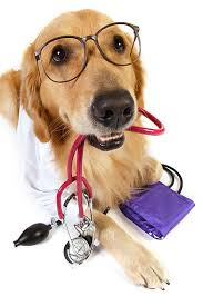 Don't be a Dr. Google - Leesburg Veterinary Hospital