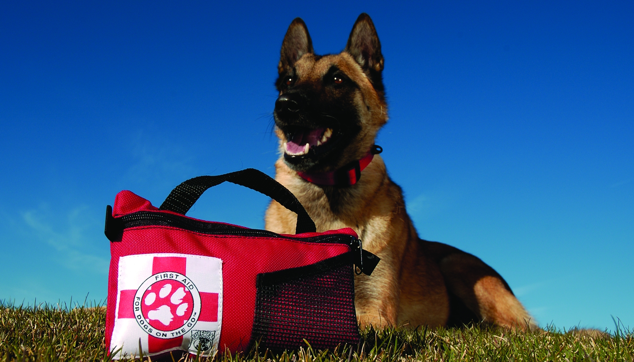 Pet first aid awareness being prepared will help keep your furry the american red cross has designated april as pet first aid awareness month just as the red cross is oftentimes the first responder when disasters strike xflitez Choice Image