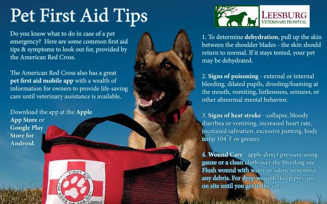 Some basic pet first aid knowledge can make all the difference in saving your pet's life in the event of an emergency. Information source: http://www.redcross.org