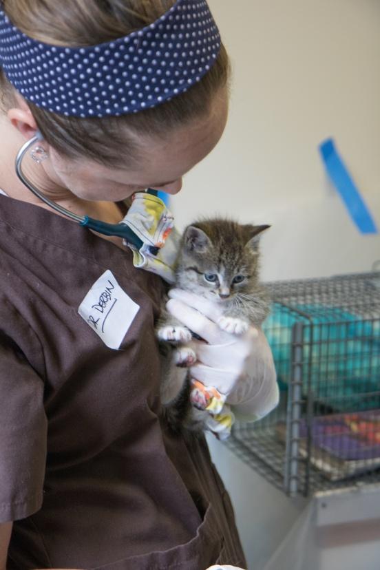 Baby Kitten_TNR Clinic_Marty McKee