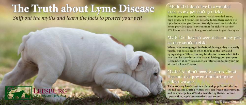 Lyme Disease Facts vs. Fiction.