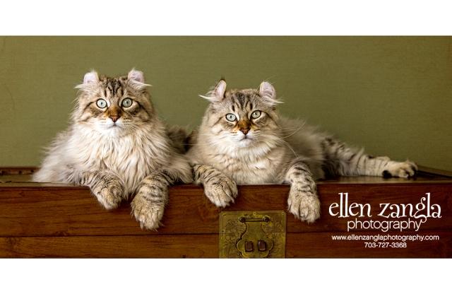 EllenZanglaPhotography_c
