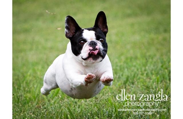 EllenZanglaPhotography_e3