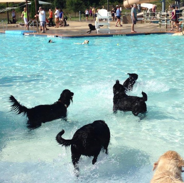 Our local canine friends had a blast at last year's Ida Lee Dog Swim, but their paws took a beating on the pool's surface.