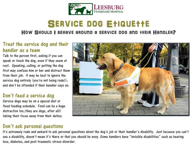 Service dogs keep