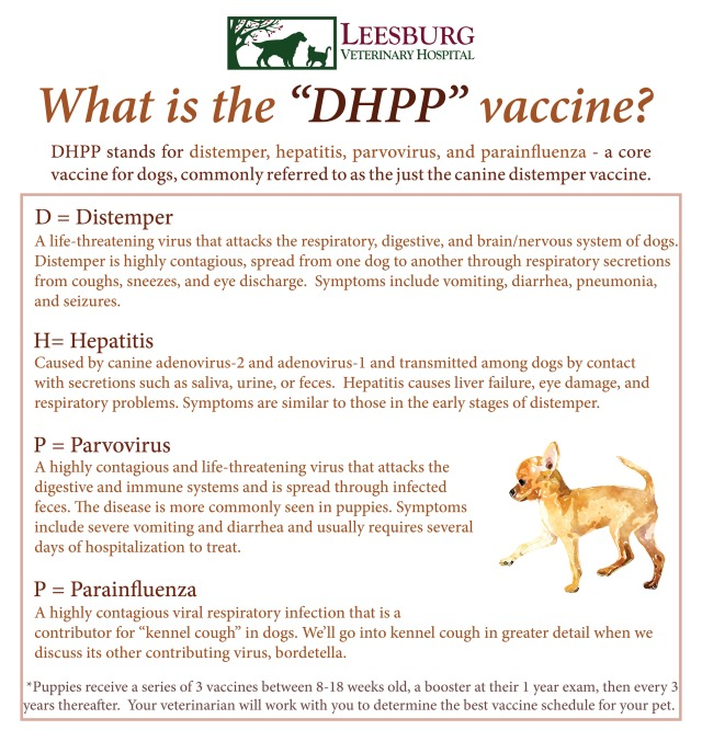 Importance of Pet Vaccines - What is Canine Distemper DHPP Vaccine - Leesburg Veterinary Hospital