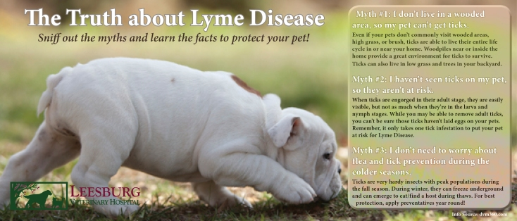 Importance of Pet Vaccination - Canine Lyme Vaccine - Lyme Disease