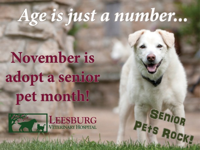 November Adopt a Senior Pet Month