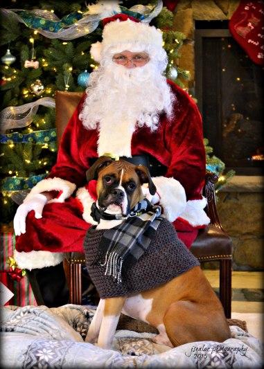 1. Apollo Buchholz Santa Paws 2015
