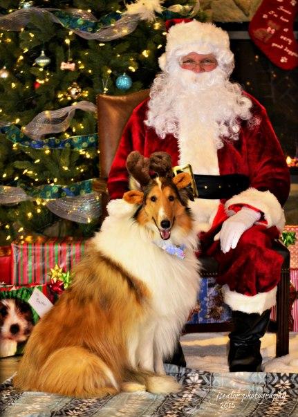 11. Misty Stewart Santa Paws 2015