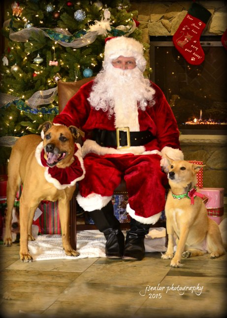 12. Roscoe and Maddie Wiley Santa Paws 2015