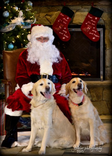 Golden Retrievers Brodie and Sophie posing pretty with the Big Guy!