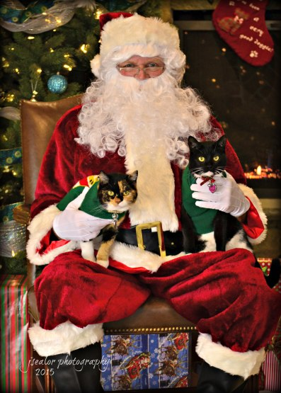With names like Cranberry and Giblet, it's hard for these cute kitties, not to be in the holiday spirit!