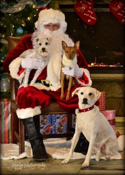 5. Frodo and Kepler Bryson and Mokey Robinson Santa Paws 2015