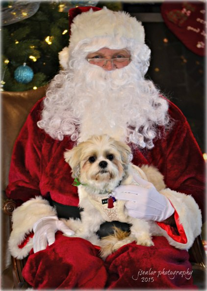 8. Lily Griffin Santa Paws 2015