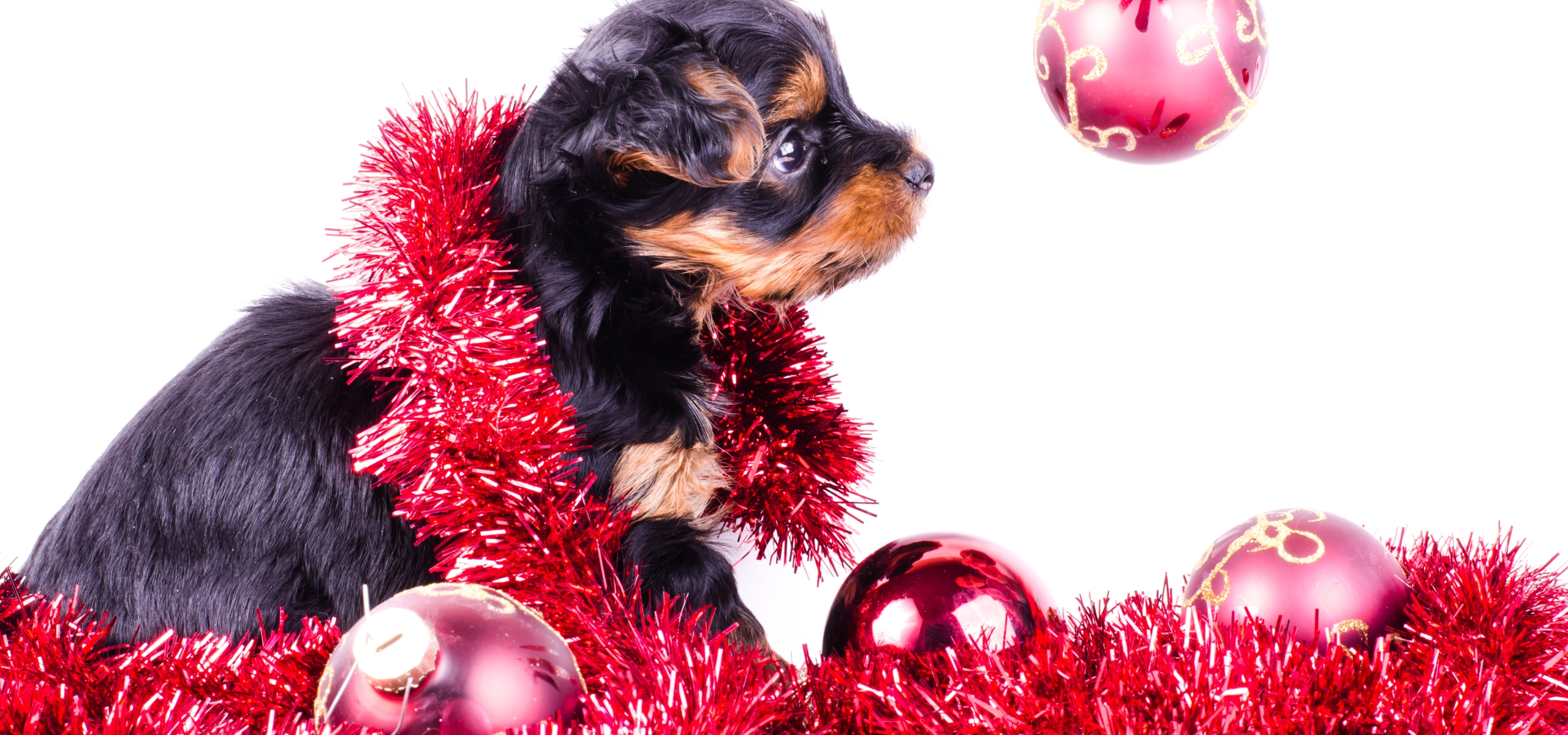 Leesburg veterinary hospitals winter holiday safety tips leesburg the hustle and bustle of the holiday season is here as you gear up for a season full of festivities and merriment be sure to take your pets well being m4hsunfo