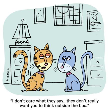 Cat-Questions-LeesburgVet-6