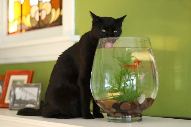 Cat-Questions-5