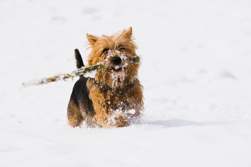Winter Pet
