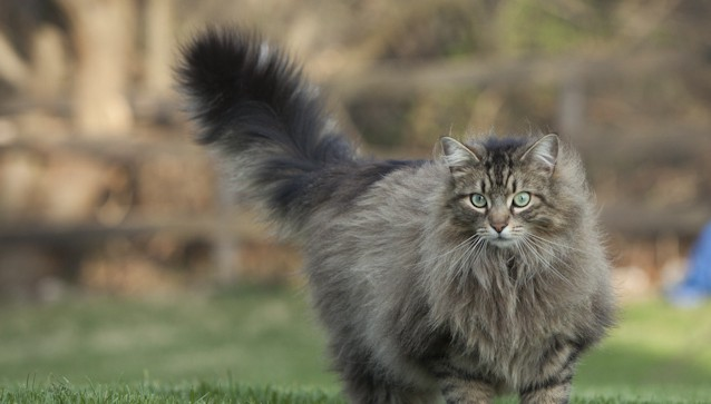 Cat-Questions-LeesburgVet
