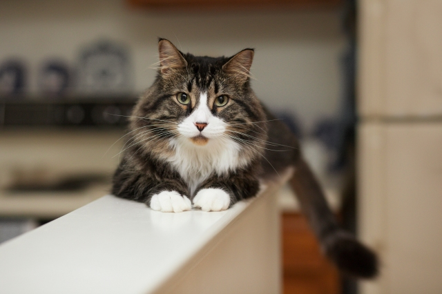 Cat-Questions-LeesburgVet-1