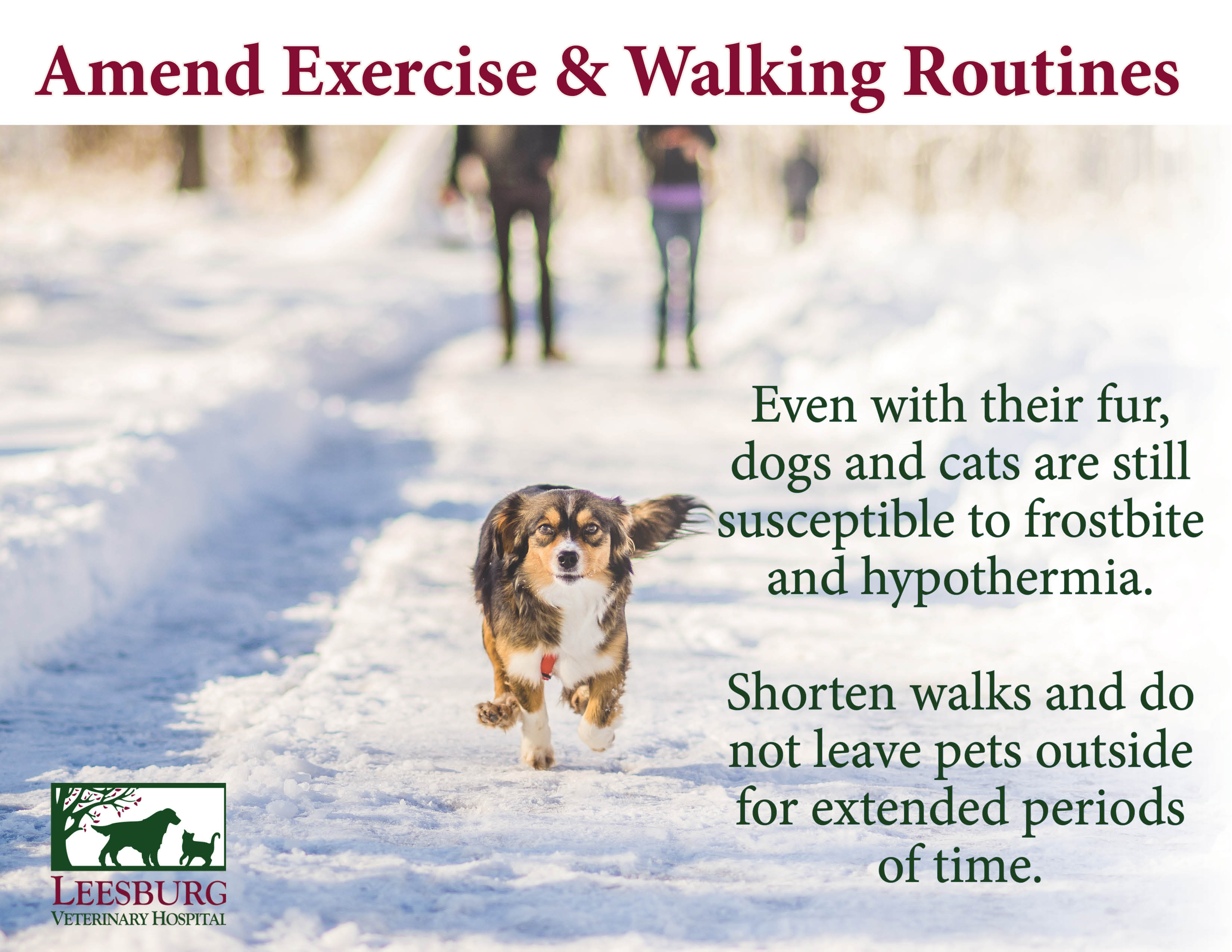 Winter and cold weather pet safety leesburg vet blog - Keeping outdoor dog happy winter ...