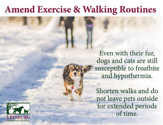 Winter and Cold Weather Pet Safety Tips