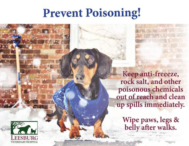 Winter and Cold Weather Pet Safety Tips - Leesburg Veterinary Hospital