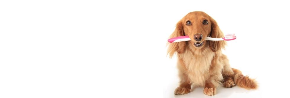 Dental-Quiz-Blog-Post---Header-photo