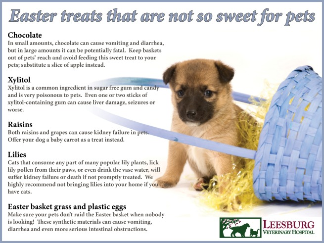 Easter pet toxins