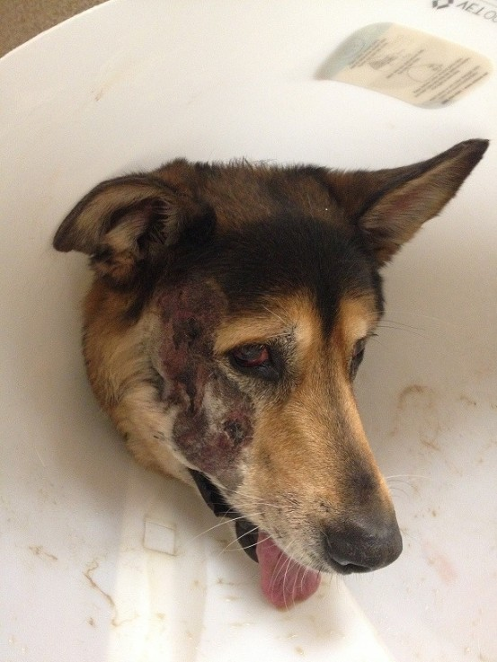 Leesburg Veterinary Hospital pet trauma